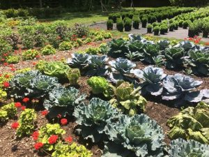Gardening Workshop with Janet Taylor @ Peabody Library